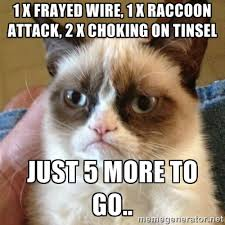 Meme Generator Raccoon - frayed memes image memes at relatably com