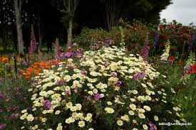 Botanical Gardens In Singapore by Botanic Garden U2013 Runeatgossip