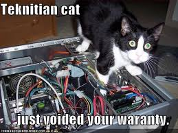 Internet Meme Cat - using an internet meme for fun and profit lolcats and i can has