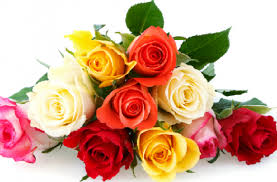 color roses what color are you proprofs quiz