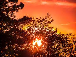 free images landscape tree nature plant sky sun sunrise