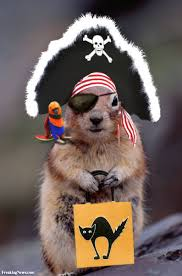 trick or nut pet lovers look at me pinterest squirrel