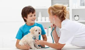 critter clinic veterinarian in boise id usa home