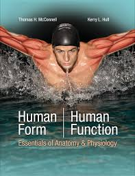 Mcgraw Hill Anatomy And Physiology Saladin 6th Edition Medical Illustrator Natalie Intven