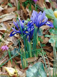 18 favorite bulb flowers for year round color hgtv