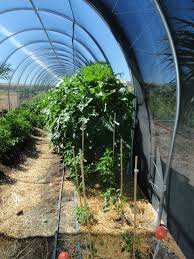 xtremehorticulture of the desert burlap as shadecloth