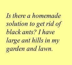 the 25 best ants in garden ideas on pinterest garden web