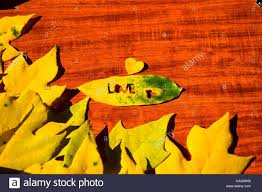 leaf fall foliage heart red valentine color autumn yellow stock