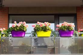 geranien auf dem balkon pflanzen und pflegen - Geranien Balkon
