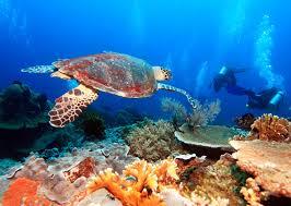 Cozumel Map Cozumel Scuba Diving Cozumel Dive Shops Restaurants Coral