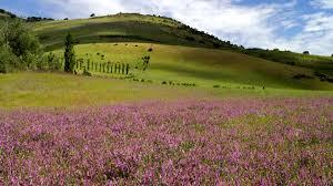 Ashland Flowers - field of flowers ashland oregon usa 4k stock video 144 183
