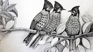 drawn bird pencil drawing pencil and in color drawn bird pencil