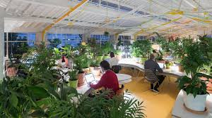 there are more than 2 000 plants in this lush coworking co design