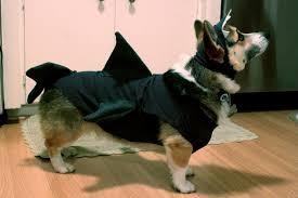 Dog Shark Halloween Costume Rouge U0026 Whimsy Easy Cheap Diy Dog Costume