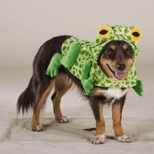 Frog Halloween Costumes 47 Halloween Costumes Dog Thefashionspot