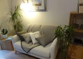 plante verte dans une chambre à coucher les plantes vertes ne dépolluent pas l air intérieur notre planete