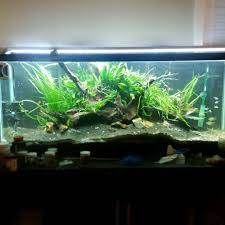 Aquascaping With Driftwood Just Rescaped My 55 Gallon Aquarium To Be A Little Less