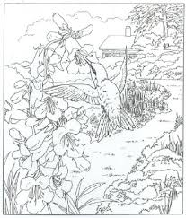 awesome idea hummingbird coloring pages hummingbird coloring pages