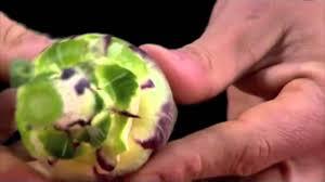comment cuisiner les artichauts violets préparer un artichaud poivrade les gestes de cuisine