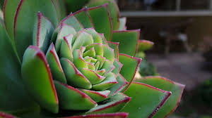 ton mariage plantes succulentes pour décorer ton mariage un bibi pour moi