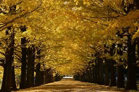 where to see the autumn leaves in tokyo time out tokyo