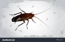 vector drawing big cockroach long moustaches stock vector