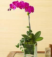 Orchid Flower Arrangements Flowers Mini Purple Phalaenopsis Orchid In Tin Flower