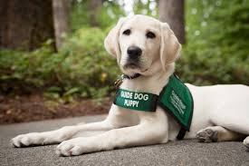 Dogs Helping Blind People Adaptive Aids Technology Aids And Guide Dogs