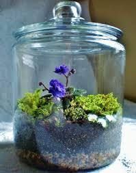 blue violet u0026 moss terrarium living art by amberelizabethart