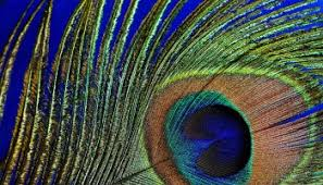 symbolic meaning of feathers on whats your sign