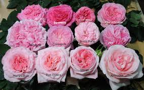roses wholesale home