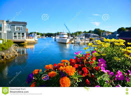 Summer Flowers by Summer Flowers In Kennebunkport Maine Stock Photo Image 74242459