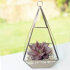 pyramid shaped glass vase succulent terrarium by dingading