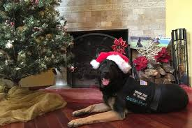 Challenge Guardian Guardian Service Dogs Newman S Own Foundation