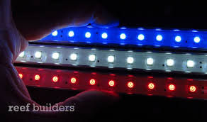 on with koven aquatics white and blue led accent