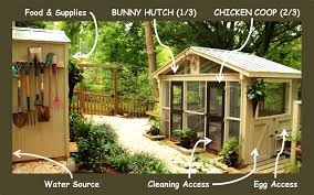 the real truth about raising backyard chickens redeem your ground