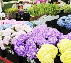 flowers direct growers direct flowers inc the los angeles flower market