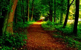grass path grass tree trees nature woods forest beautiful