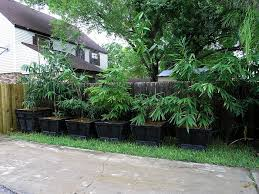 bambooweb info u2022 view topic looking for a large 50 gallon