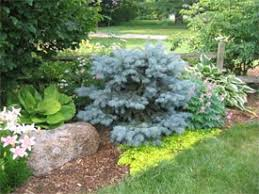 your gardening timeline introduction to perennial garden design