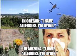 Arizona Memes - allergies imgflip