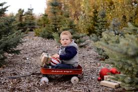 outdoor tree farm calgary family mini sessions