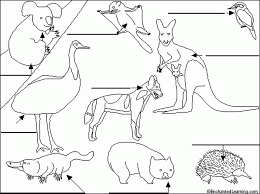 99 ideas coloring page australian animals on emergingartspdx com