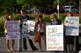 Zoo Lights Denver Co by Protesters At Denver Zoo Hold Candle Light Vigil For Slain Gorilla