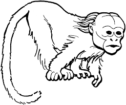 monkey coloring pages hanging monkey coloring pages monkey 18101