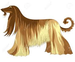 afghan hound saddle 3 572 shaggy stock illustrations cliparts and royalty free shaggy