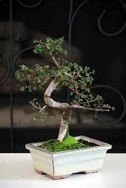 enchanting miniature bonsai decoration ideas