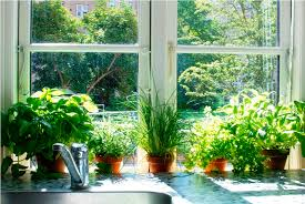 Indoor Herb Planters by Best Herb Planter Ideas Best Home Decor Inspirations