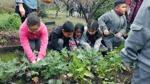 the garden foundation helps south l a kids learn about