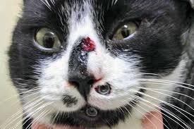 Omg Cat Meme - cat meme faces 28 images upside down cat face blank template